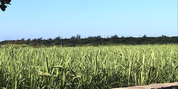 宮古島ライフを満喫できる農業補助
